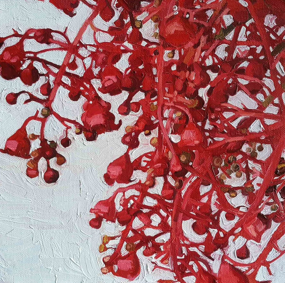 FLAME TREE BLOSSOMS DECEMBER